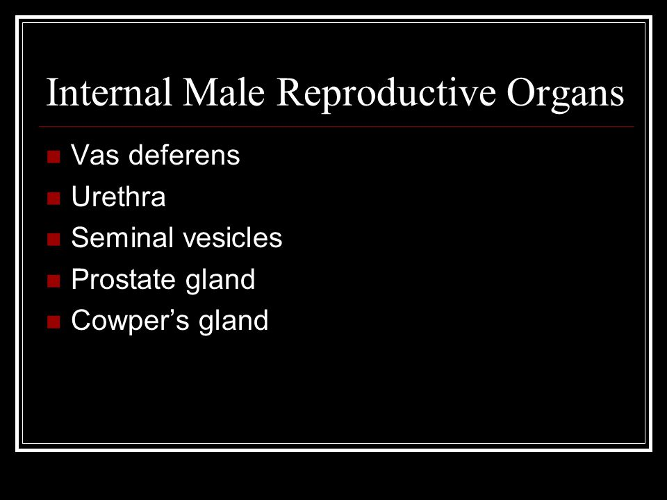 Internal Male Reproductive Organs Vas deferens Urethra Seminal vesicles Prostate gland Cowper's gland