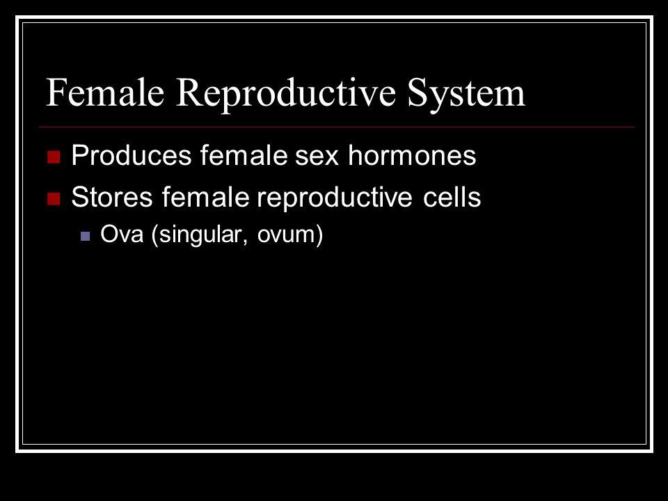 Female Reproductive System Produces female sex hormones Stores female reproductive cells Ova (singular, ovum)