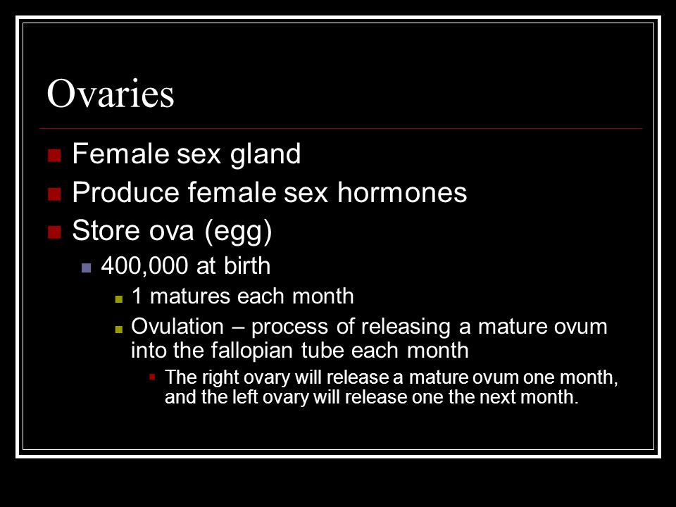 Ovaries Female sex gland Produce female sex hormones Store ova (egg) 400,000 at birth 1 matures each month Ovulation – process of releasing a mature o
