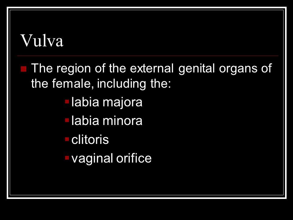 Vulva The region of the external genital organs of the female, including the:  labia majora  labia minora  clitoris  vaginal orifice