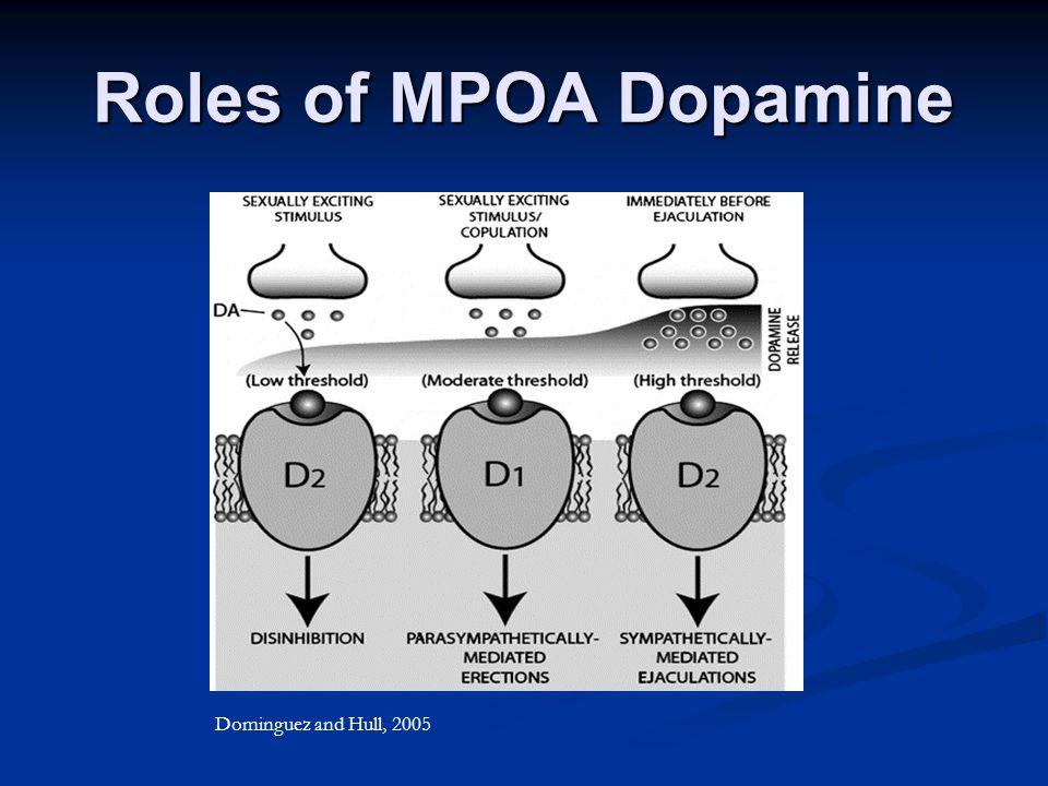 Roles of MPOA Dopamine Dominguez and Hull, 2005