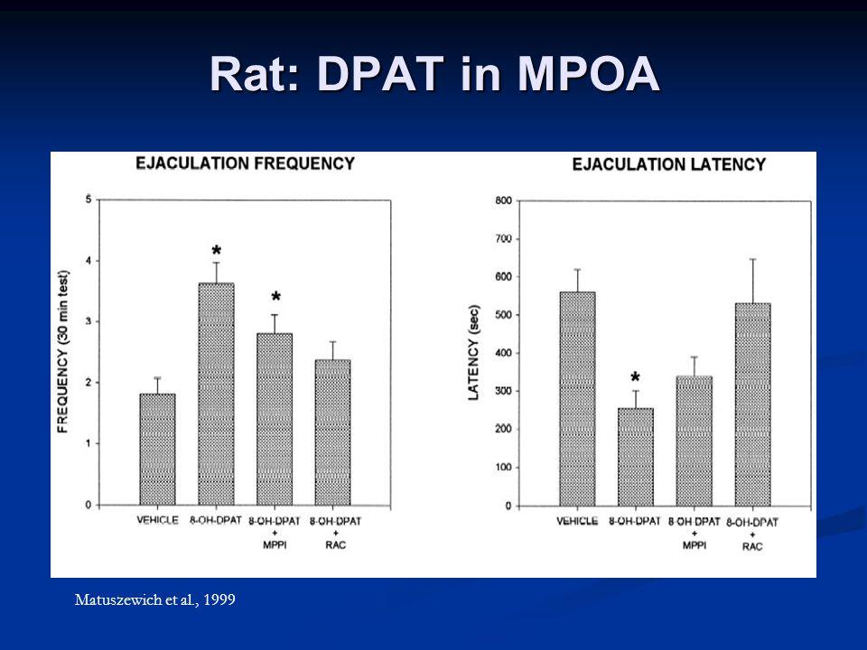 Rat: DPAT in MPOA Matuszewich et al., 1999