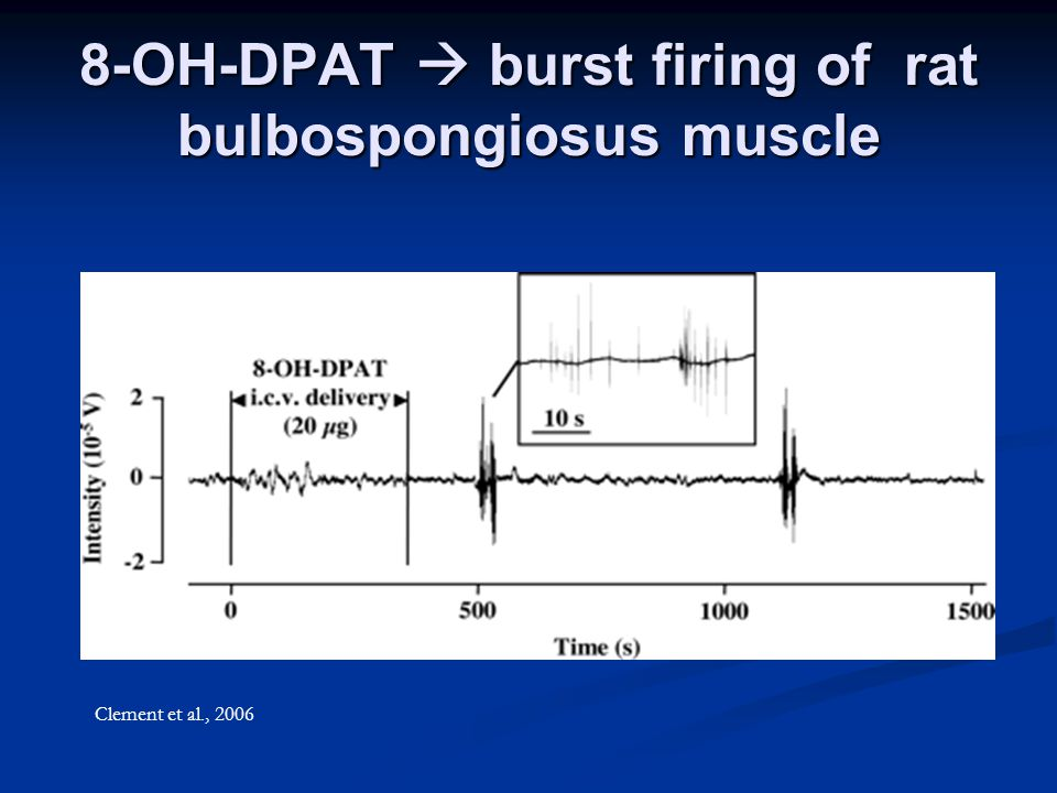 8-OH-DPAT  burst firing of rat bulbospongiosus muscle Clement et al., 2006