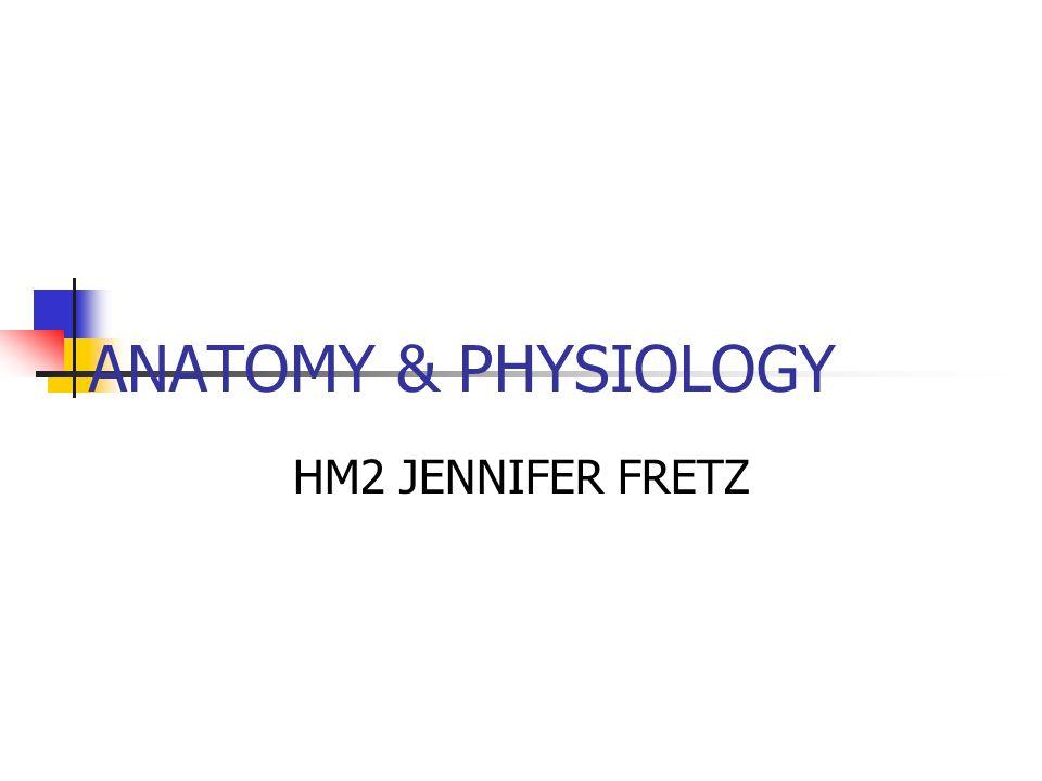 ANATOMY & PHYSIOLOGY HM2 JENNIFER FRETZ