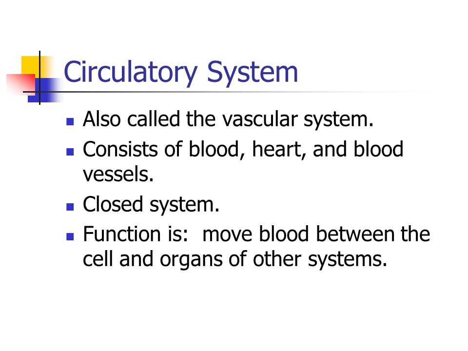 Circulatory System Also called the vascular system.