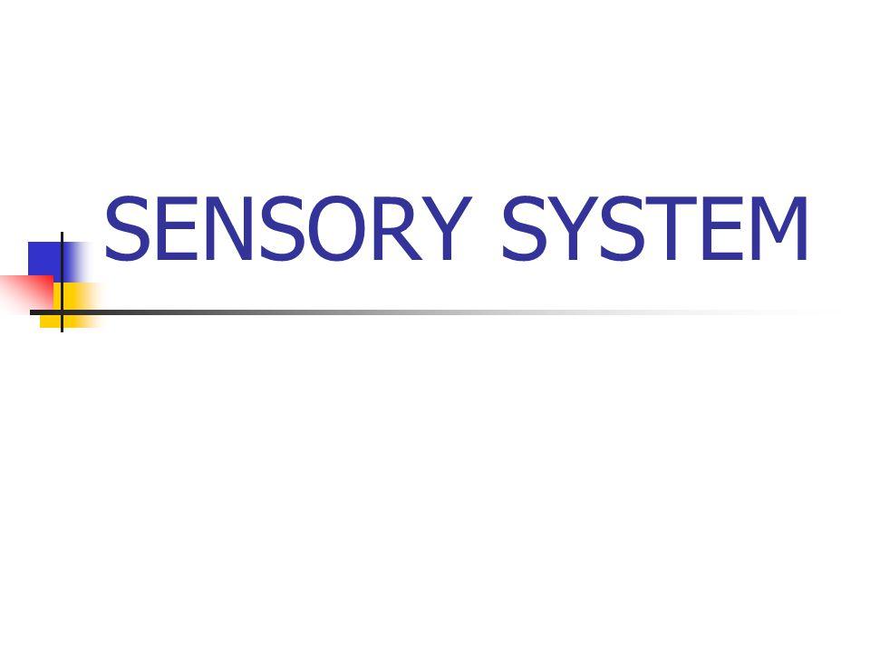 SENSORY SYSTEM