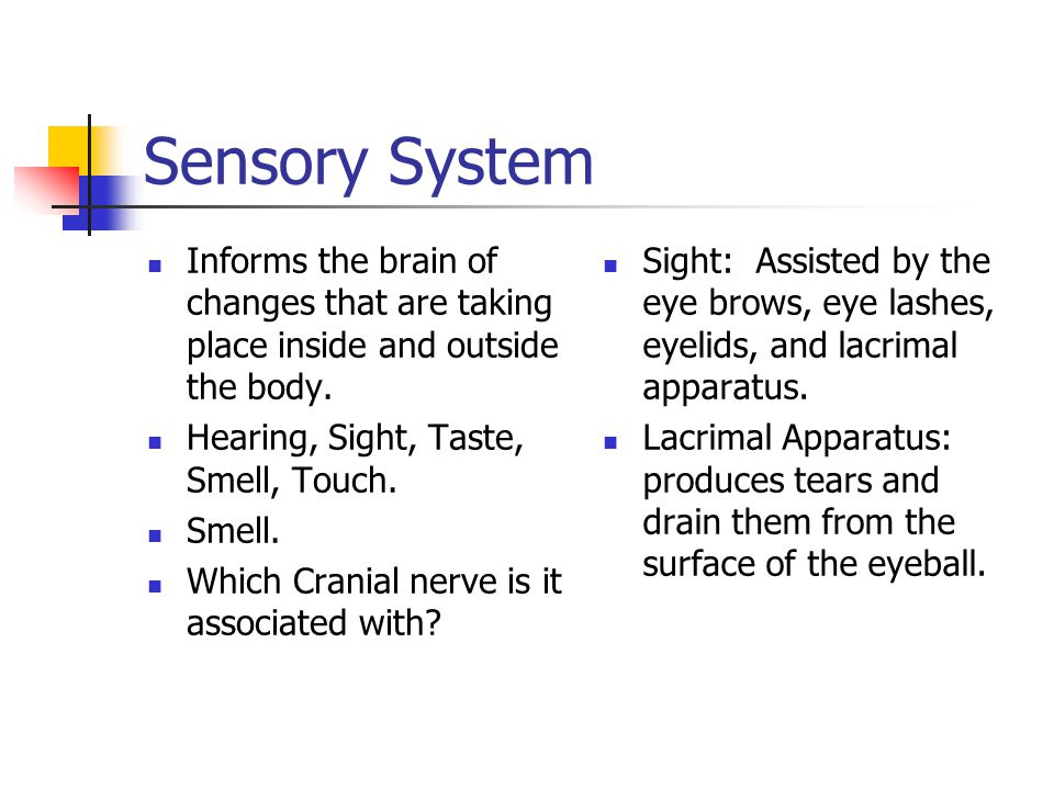Sensory System Informs the brain of changes that are taking place inside and outside the body.