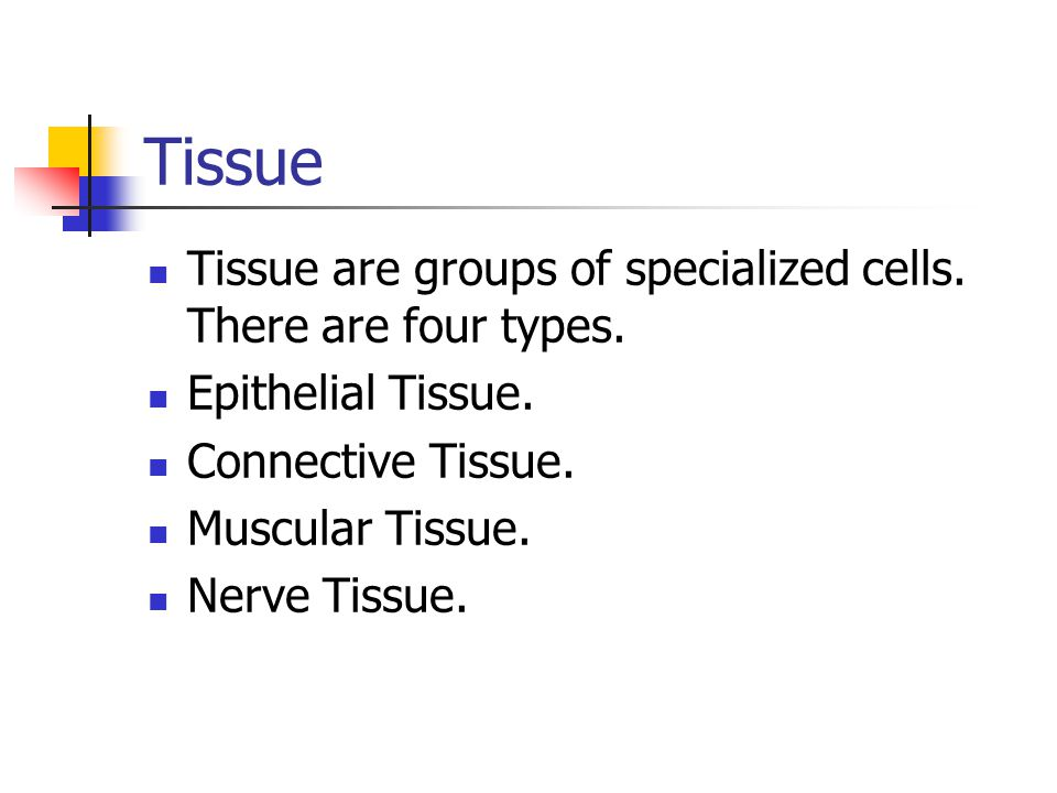 Tissue Tissue are groups of specialized cells.There are four types.