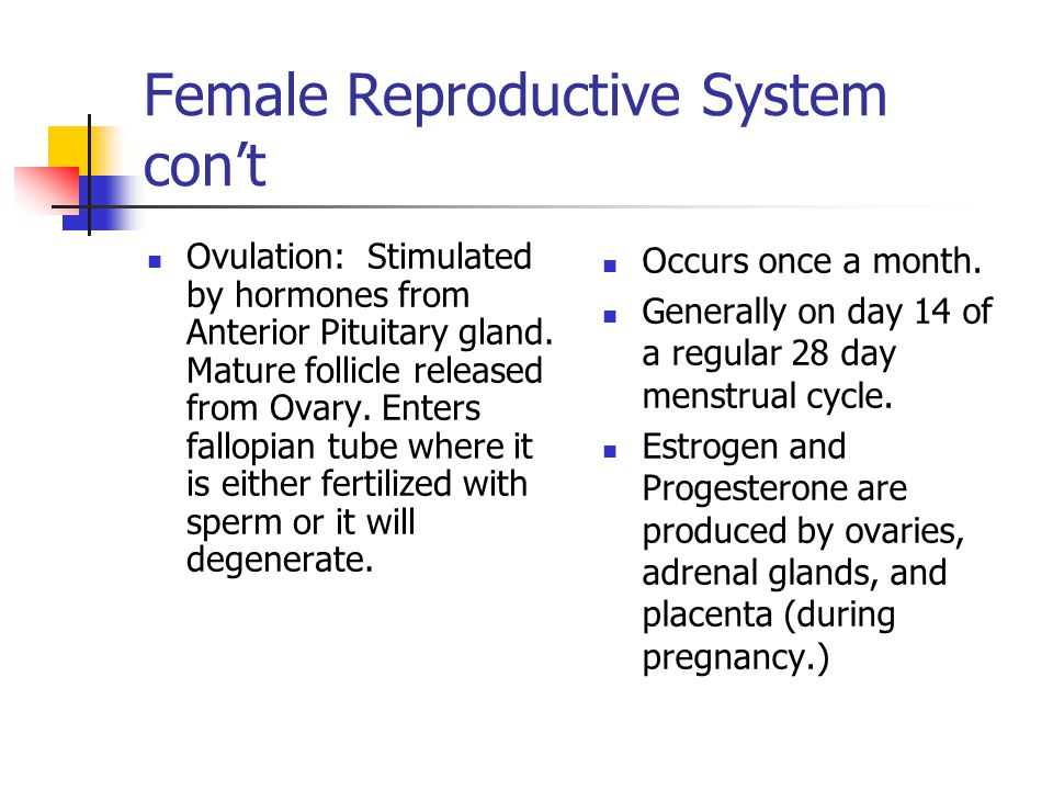 Ovulation: Stimulated by hormones from Anterior Pituitary gland.