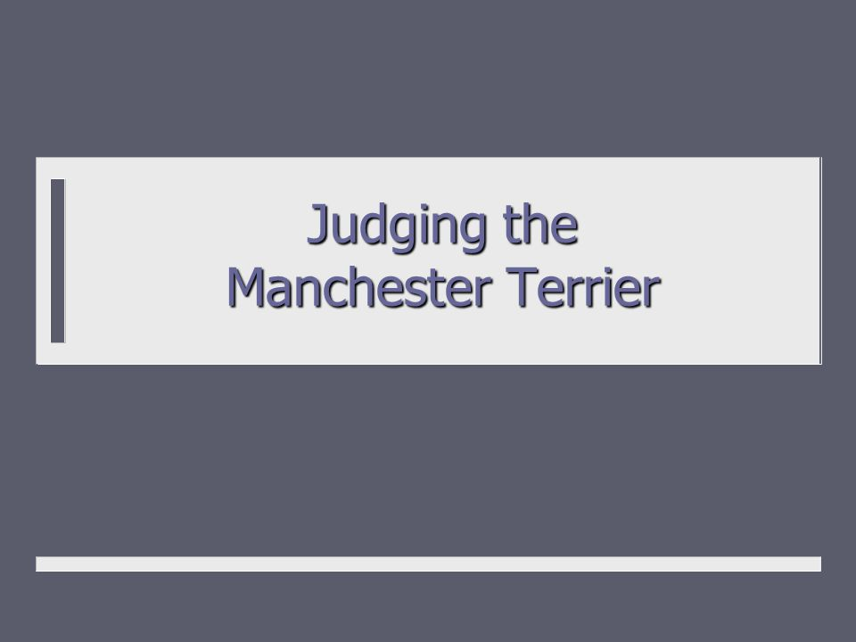 Judging the Manchester Terrier