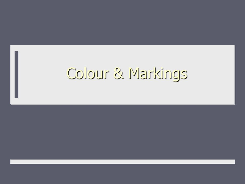 Colour & Markings