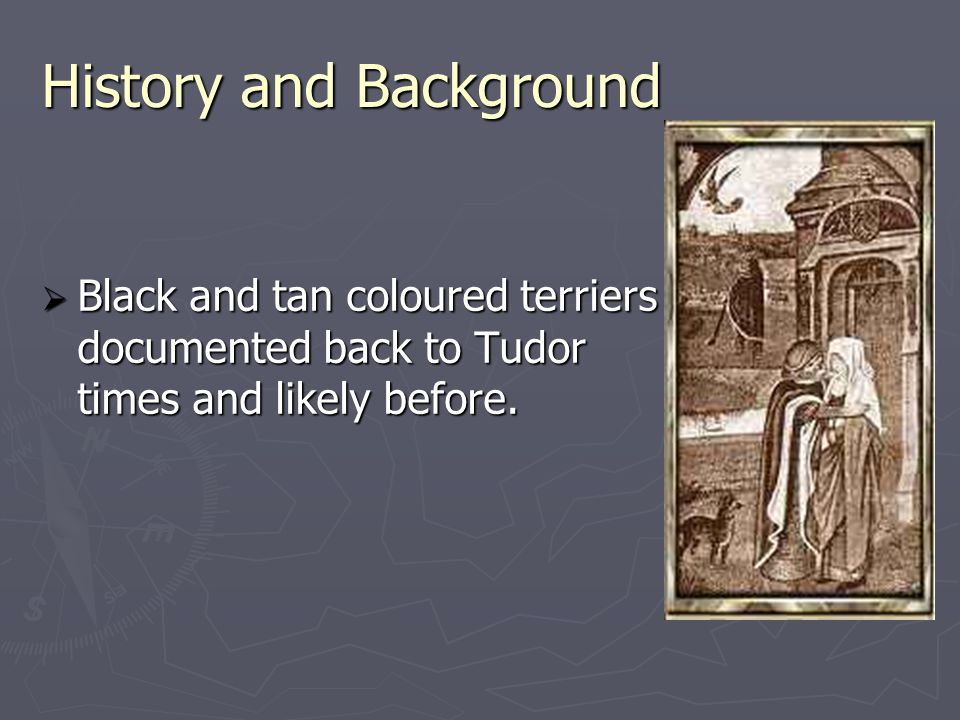 History and Background  Black and tan coloured terriers documented back to Tudor times and likely before.