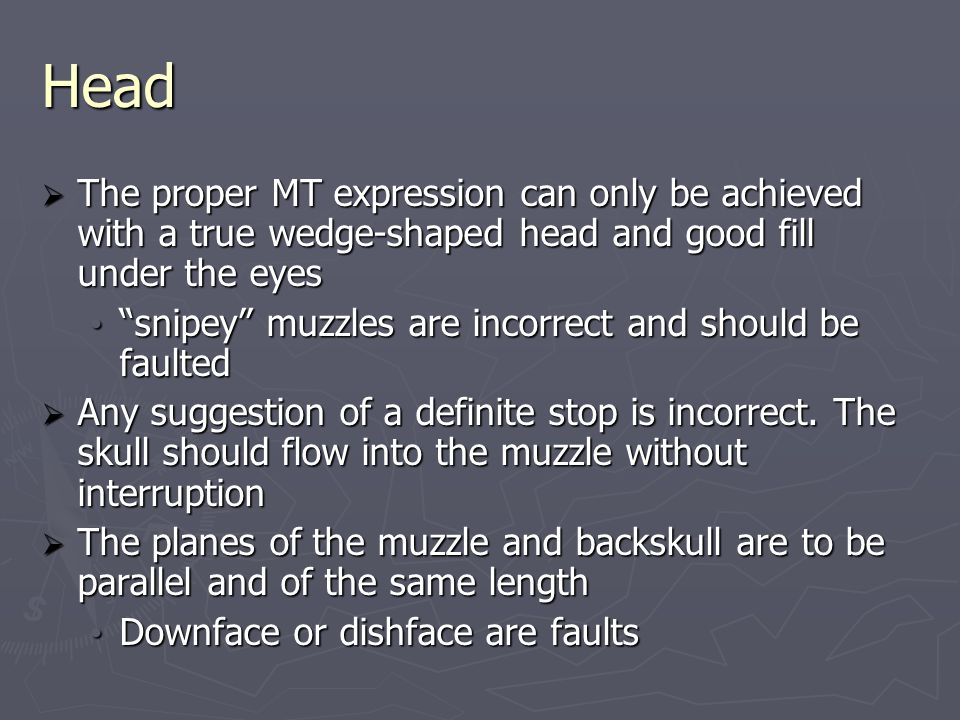 Head  The proper MT expression can only be achieved with a true wedge-shaped head and good fill under the eyes snipey muzzles are incorrect and should be faulted snipey muzzles are incorrect and should be faulted  Any suggestion of a definite stop is incorrect.