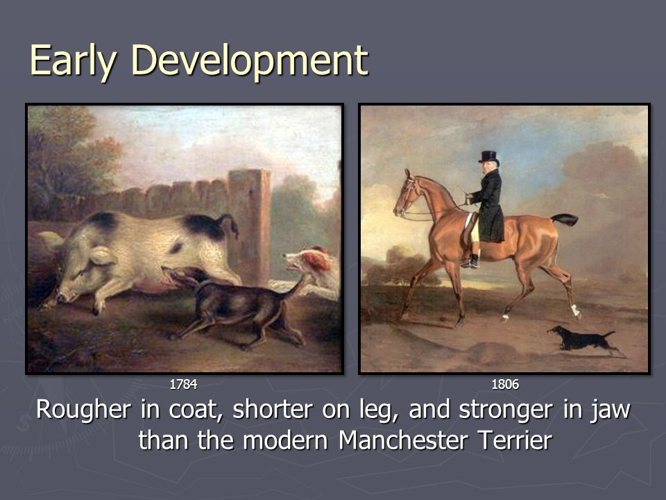 Early Development 18041824 Vermin control, coursing small game, riding to the hounds