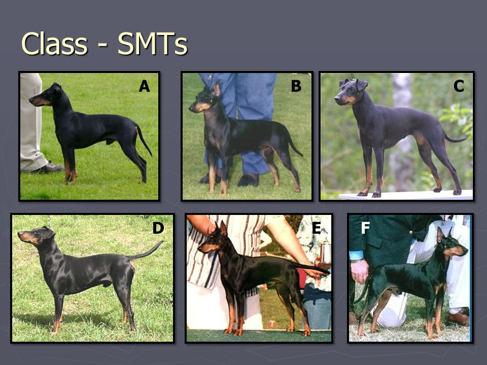 Class - SMTs ABC DEF