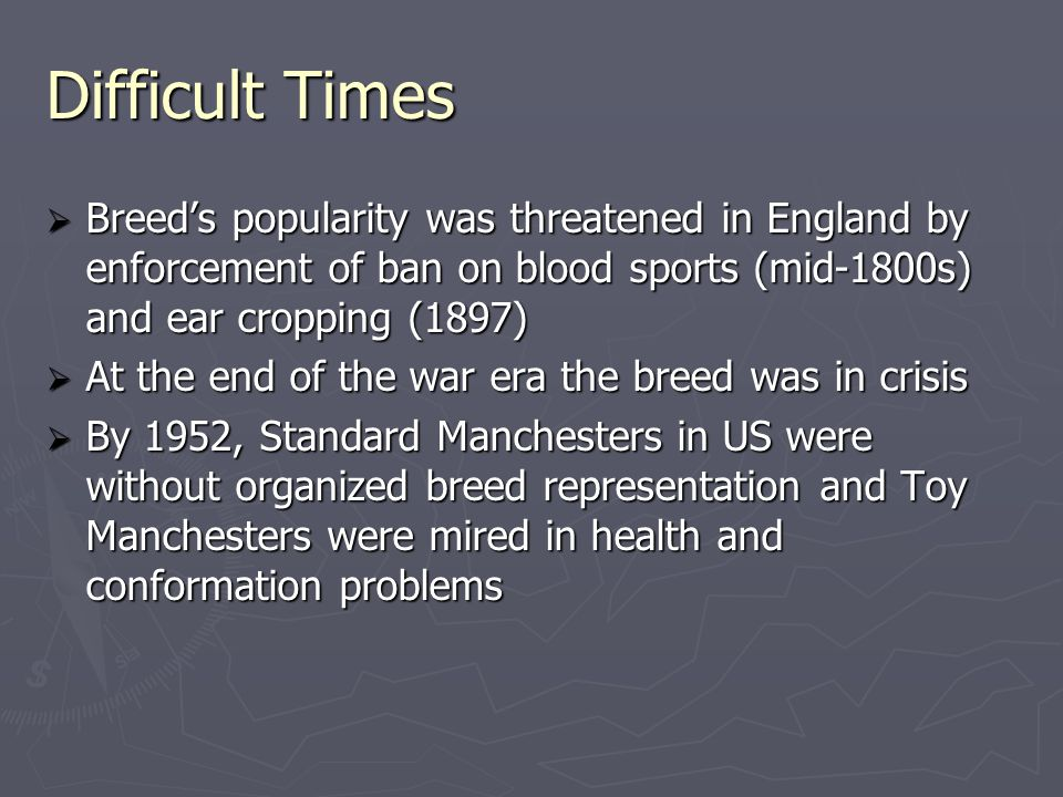 Gait:  Gait should be free and effortless with good reach of forequarters and strong drive in the rear  The topline should not move up and down  Any suggestion of a hackney gait or goose- stepping should be penalized  A Manchester's movement should not be judged at a run