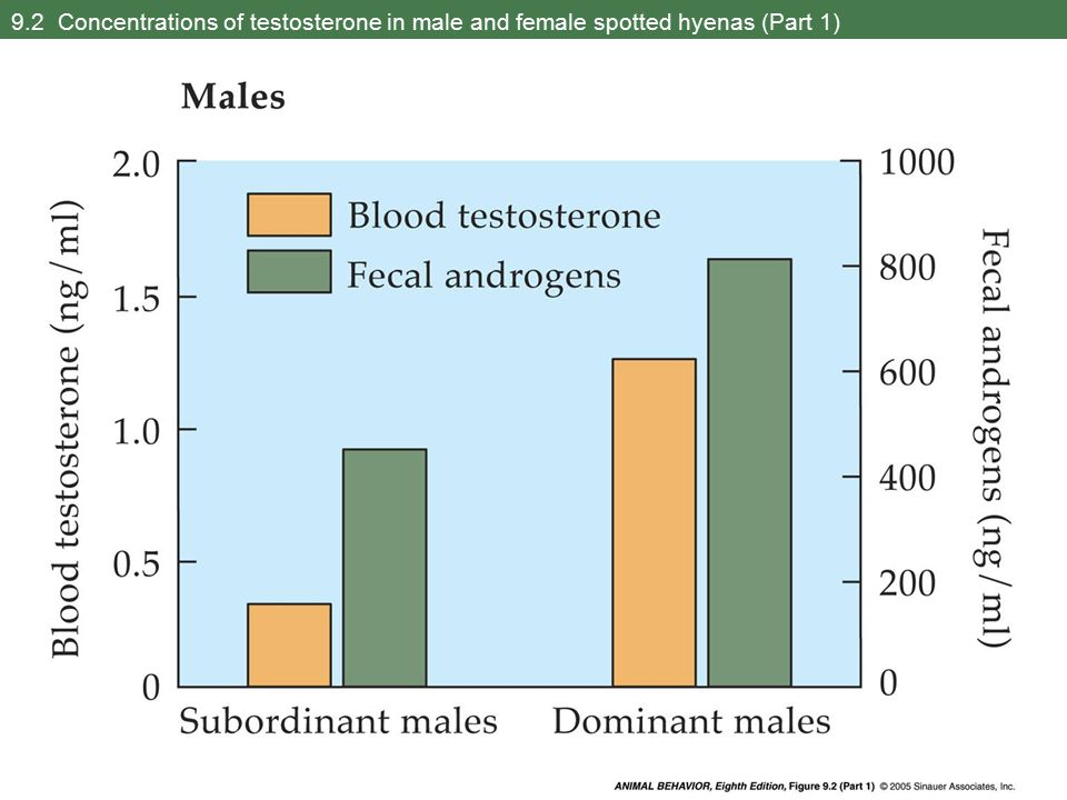 9.2 Concentrations of testosterone in male and female spotted hyenas (Part 1)