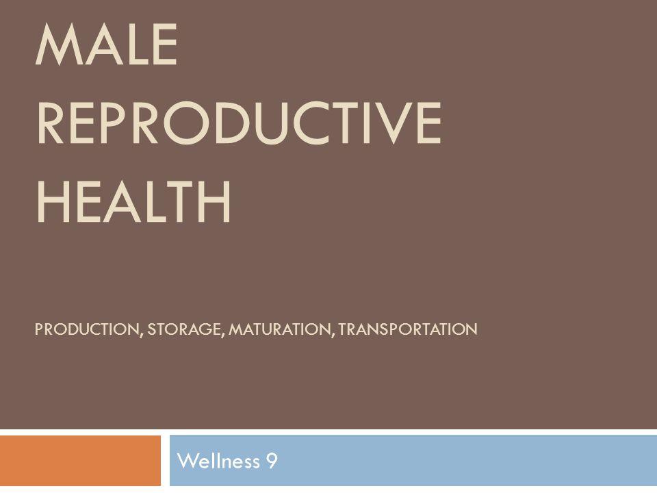 MALE REPRODUCTIVE HEALTH PRODUCTION, STORAGE, MATURATION, TRANSPORTATION Wellness 9