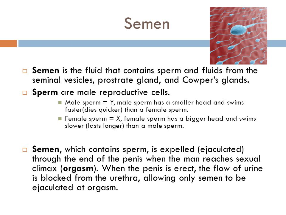 Semen  Semen is the fluid that contains sperm and fluids from the seminal vesicles, prostrate gland, and Cowper's glands.  Sperm are male reproducti