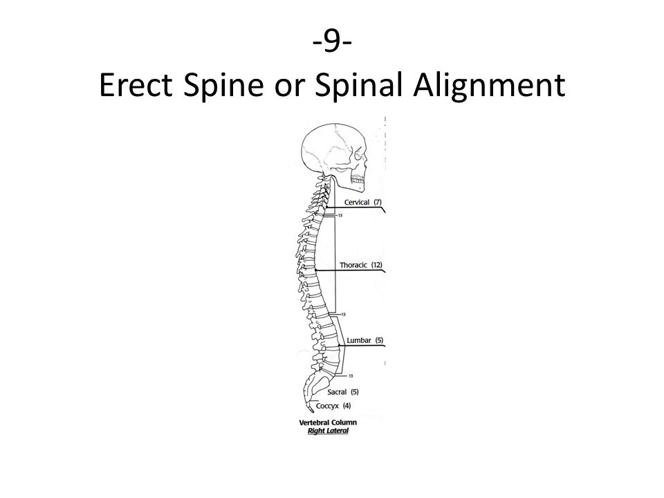 -9- Erect Spine or Spinal Alignment