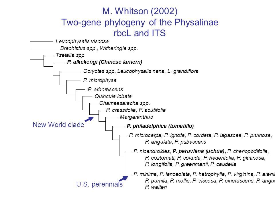 Nomenclature Physalis philadelphica Lam.(= P.
