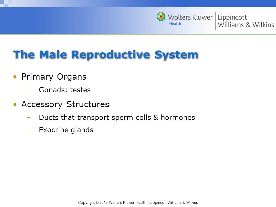 Copyright © 2013 Wolters Kluwer Health   Lippincott Williams & Wilkins The Female Reproductive System (cont'd)