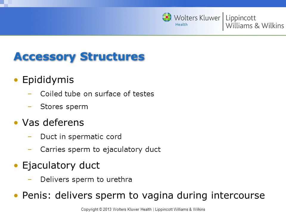 Copyright © 2013 Wolters Kluwer Health   Lippincott Williams & Wilkins Semen Mix of sperm cells & secretions from other glands Expelled from body in ejaculation Functions of secretions in semen: –Nourish sperm cells –Transport them –Neutralize acidity of male urethra & female vaginal tract –Lubricate female reproductive tract during intercourse –Prevent infection by using antibacterial enzymes & antibodies