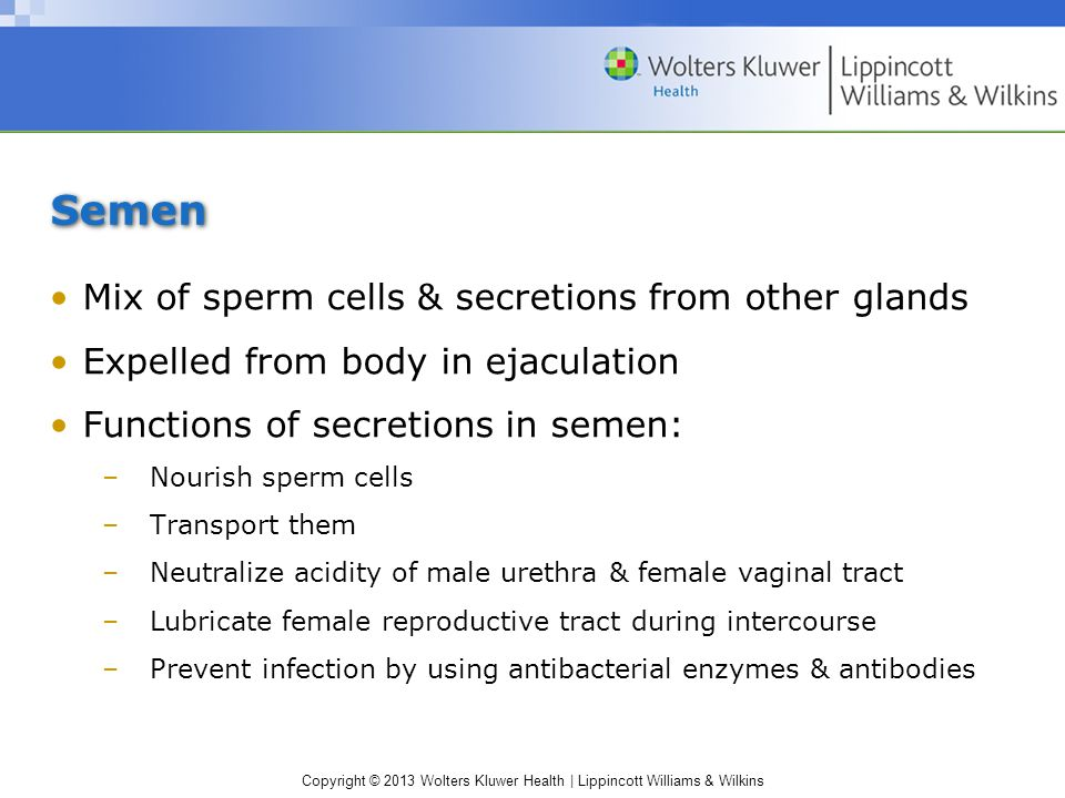Copyright © 2013 Wolters Kluwer Health | Lippincott Williams & Wilkins Semen Mix of sperm cells & secretions from other glands Expelled from body in e