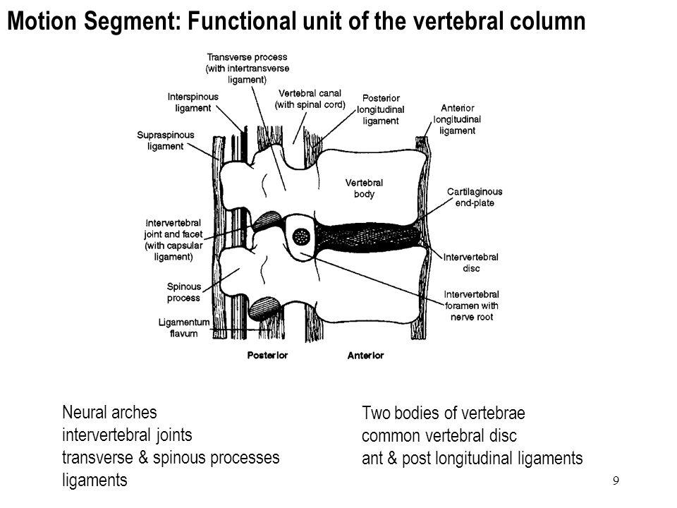 9 Motion Segment: Functional unit of the vertebral column Two bodies of vertebrae common vertebral disc ant & post longitudinal ligaments Neural arche