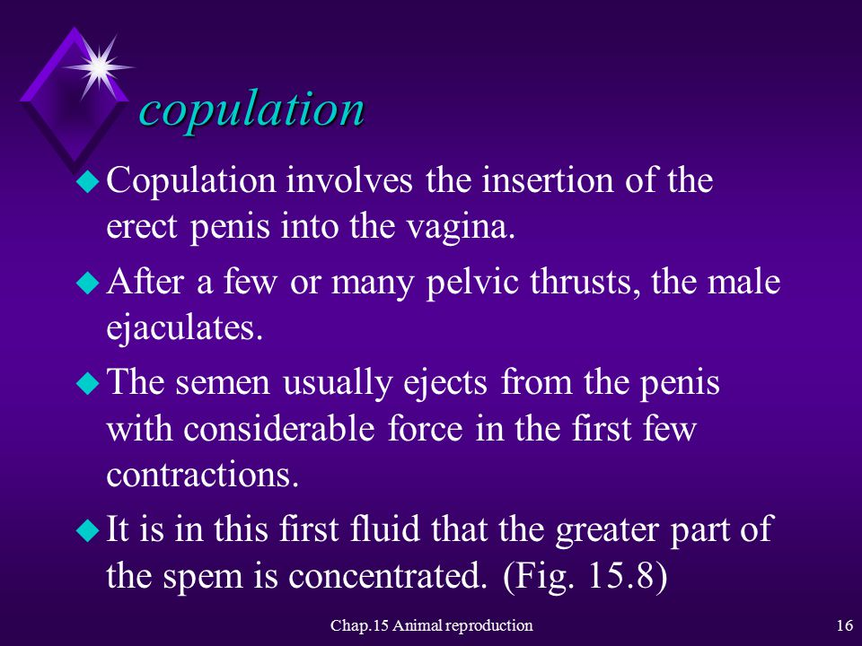 Chap.15 Animal reproduction15 As foreplay continues u With more extensive foreplay, the labia minora and clitoris may enlarge and redden as blood rushes to those areas.