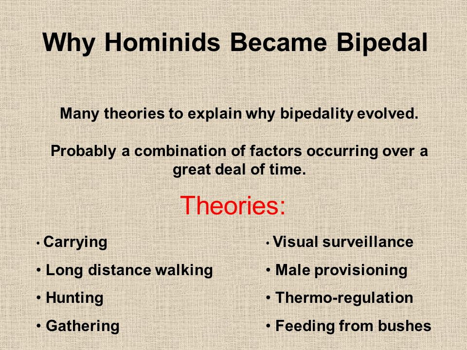 Why Hominids Became Bipedal Many theories to explain why bipedality evolved.