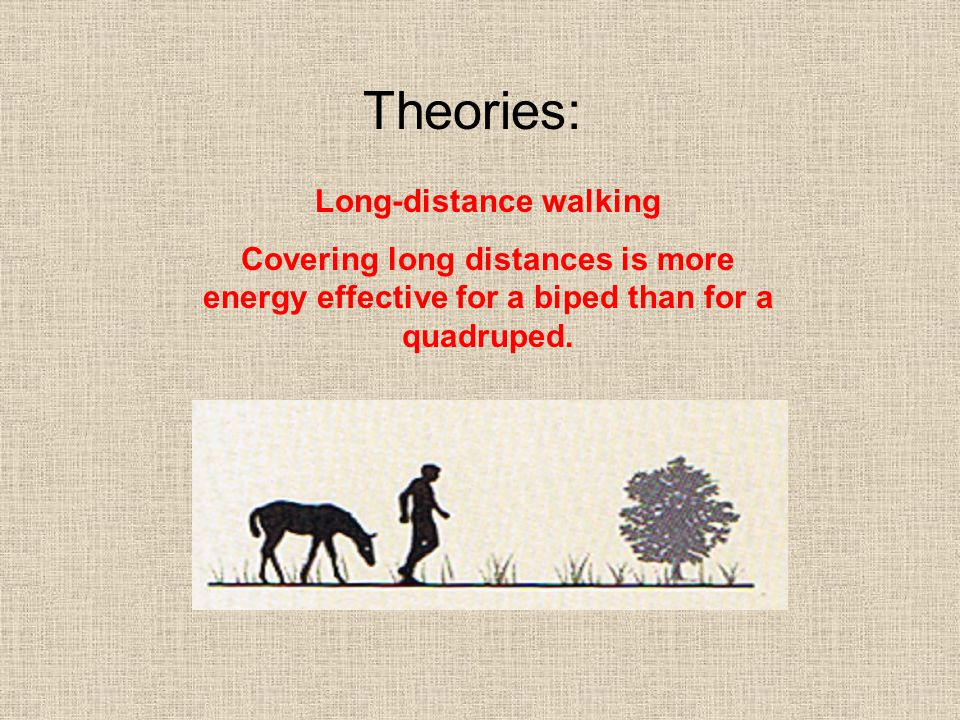 Theories: Long-distance walking Covering long distances is more energy effective for a biped than for a quadruped.
