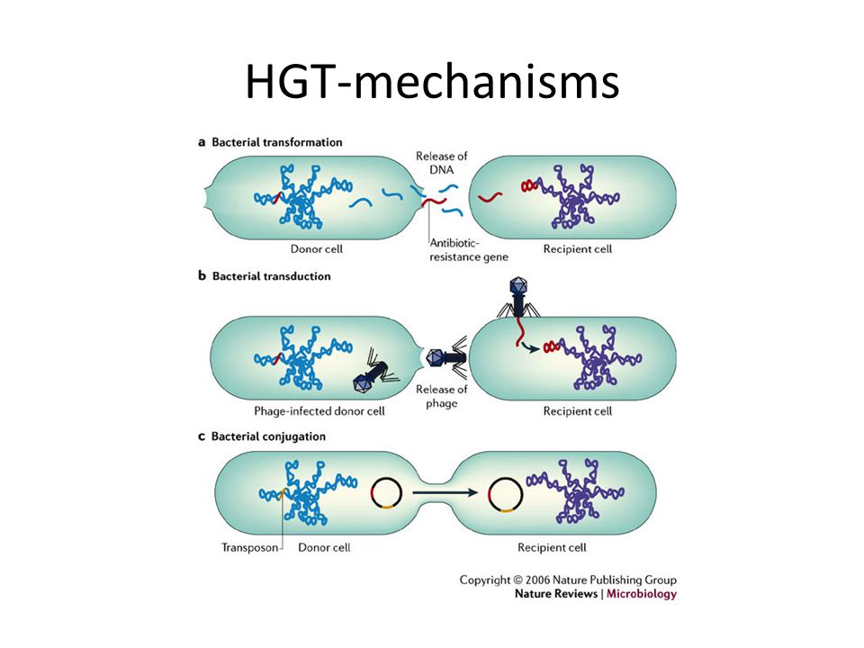 HGT-mechanisms