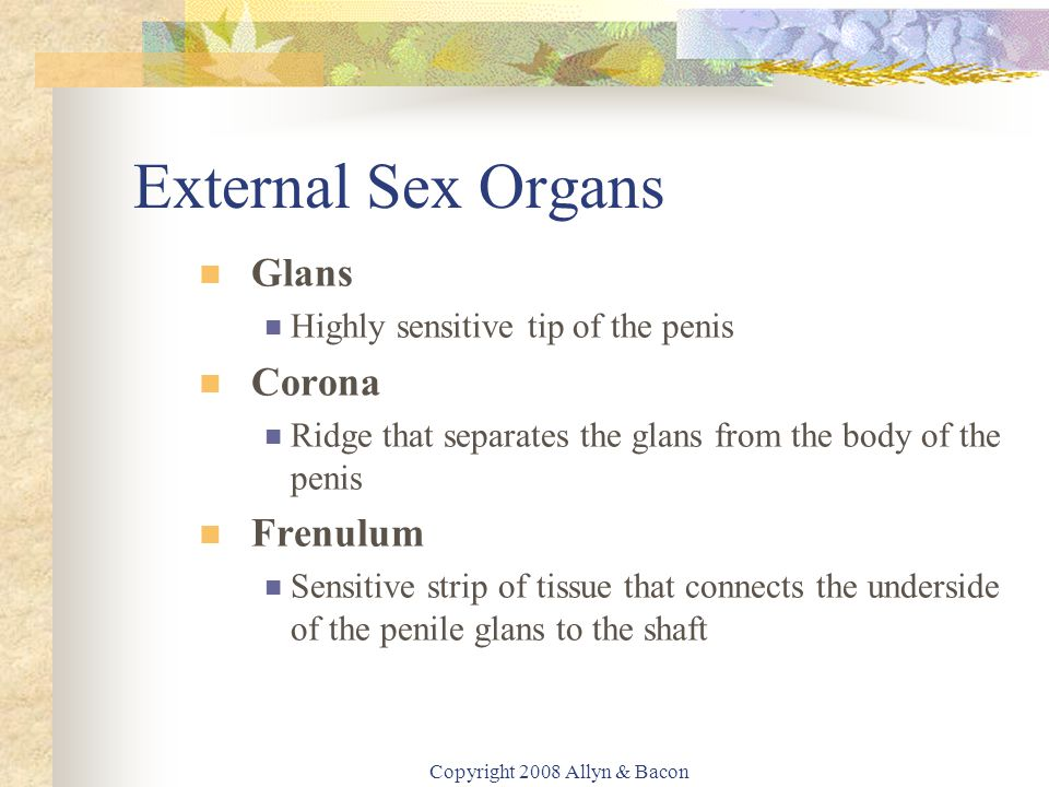 Copyright 2008 Allyn & Bacon External Sex Organs Glans Highly sensitive tip of the penis Corona Ridge that separates the glans from the body of the penis Frenulum Sensitive strip of tissue that connects the underside of the penile glans to the shaft