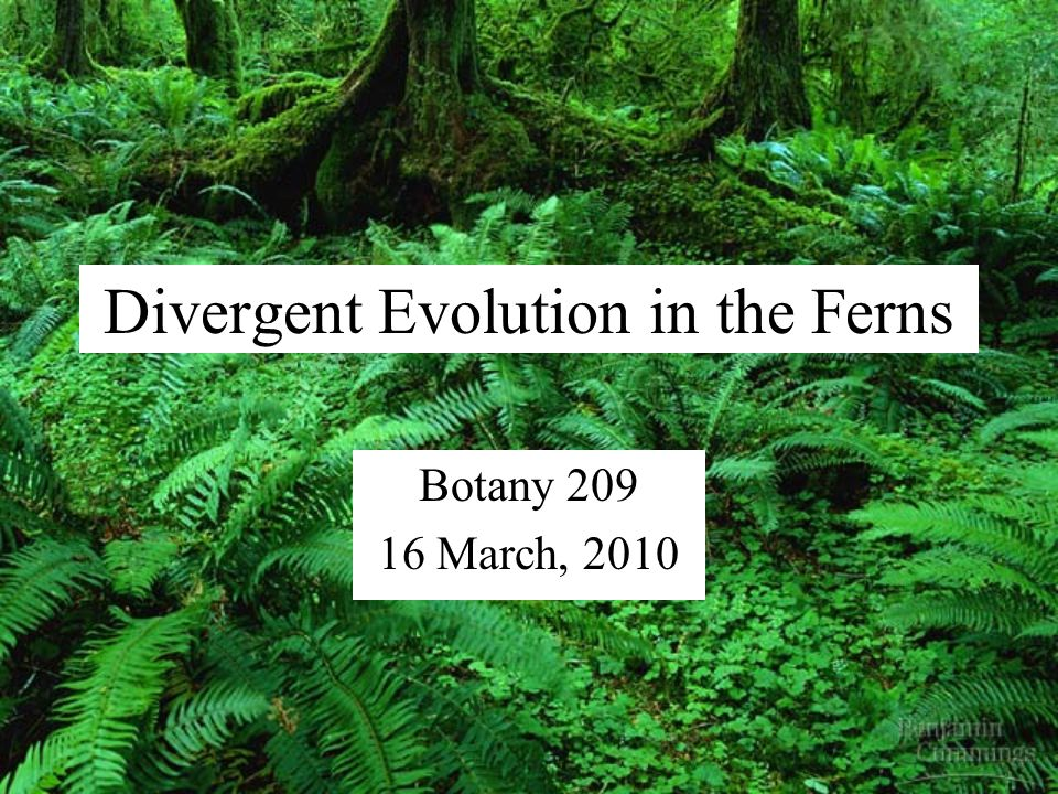 Divergent Evolution in the Ferns Botany 209 16 March, 2010