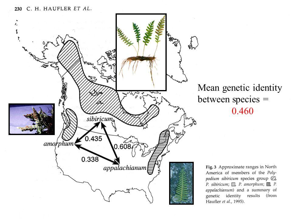 Mean genetic identity between species = 0.460