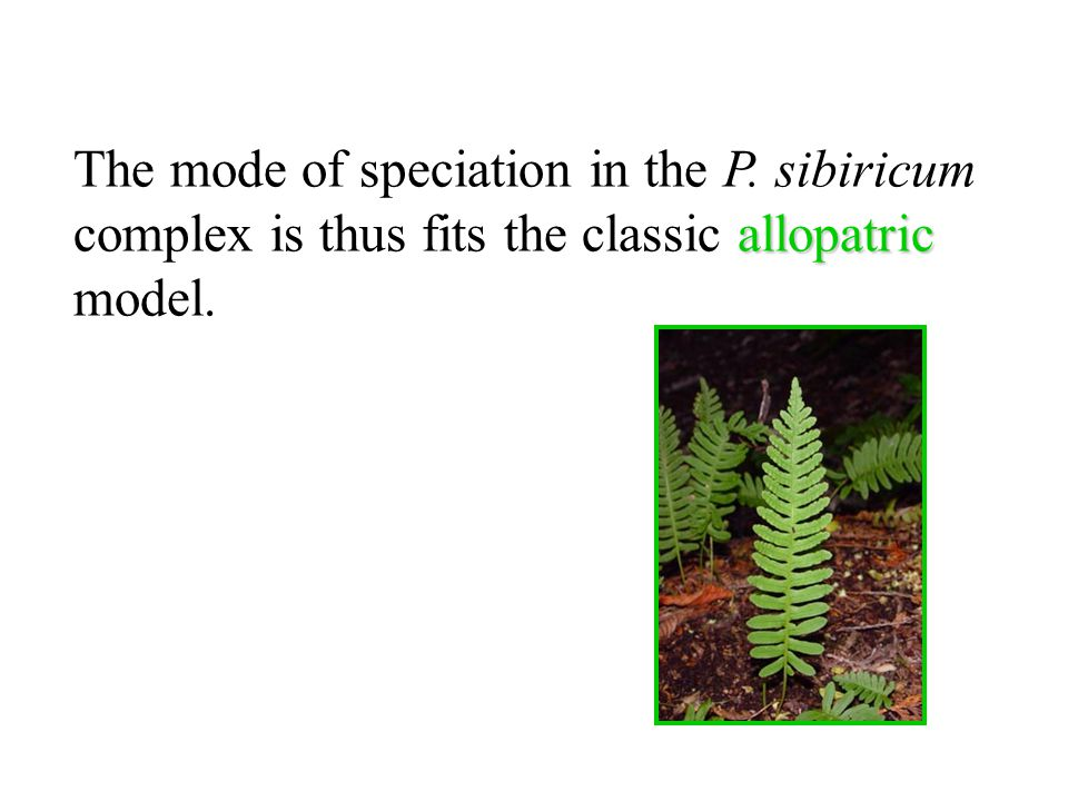 The mode of speciation in the P.