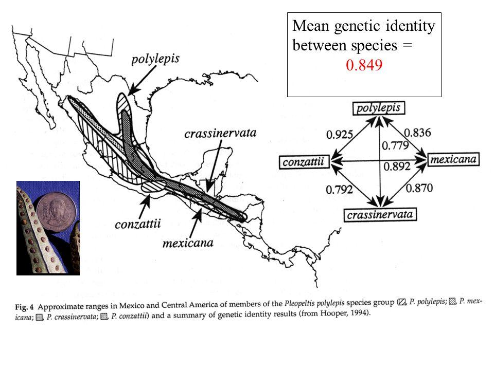 Mean genetic identity between species = 0.849