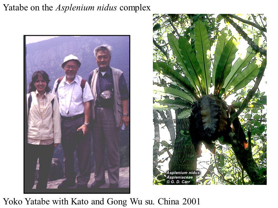Yatabe on the Asplenium nidus complex Yoko Yatabe with Kato and Gong Wu su. China 2001