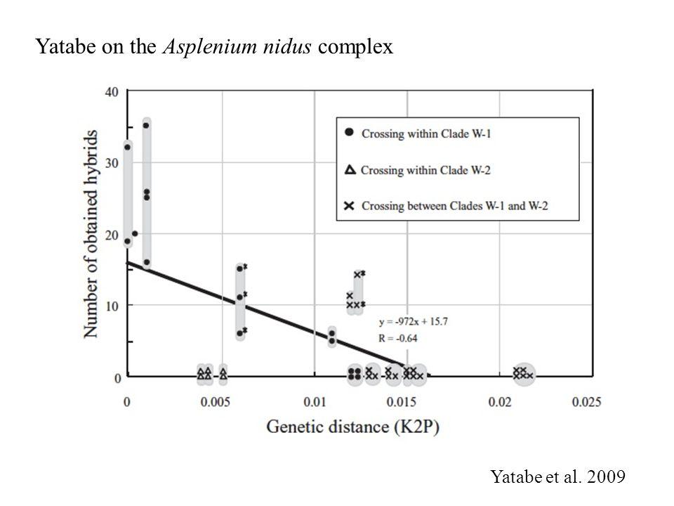 Yatabe on the Asplenium nidus complex Yatabe et al. 2009