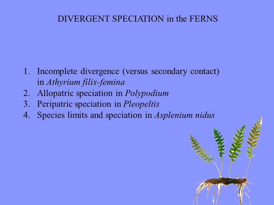 DIVERGENT SPECIATION in the FERNS 1.Incomplete divergence (versus secondary contact) in Athyrium filix-femina 2.Allopatric speciation in Polypodium 3.Peripatric speciation in Pleopeltis 4.Species limits and speciation in Asplenium nidus