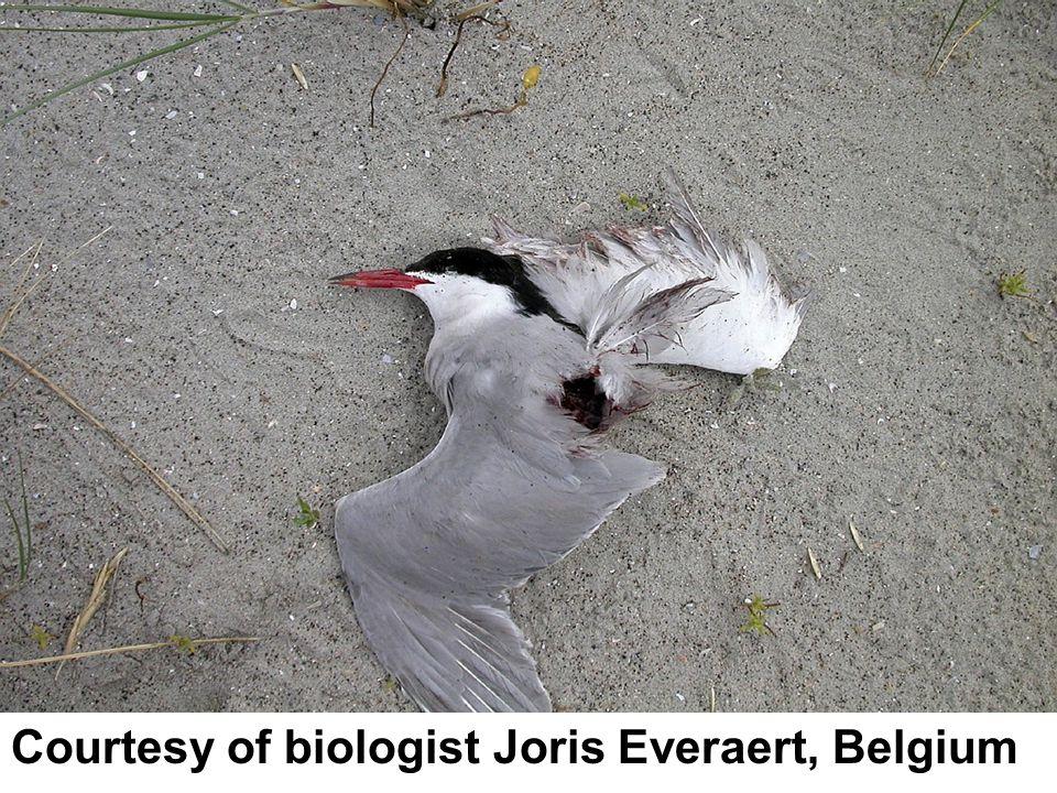 Courtesy of biologist Joris Everaert, Belgium