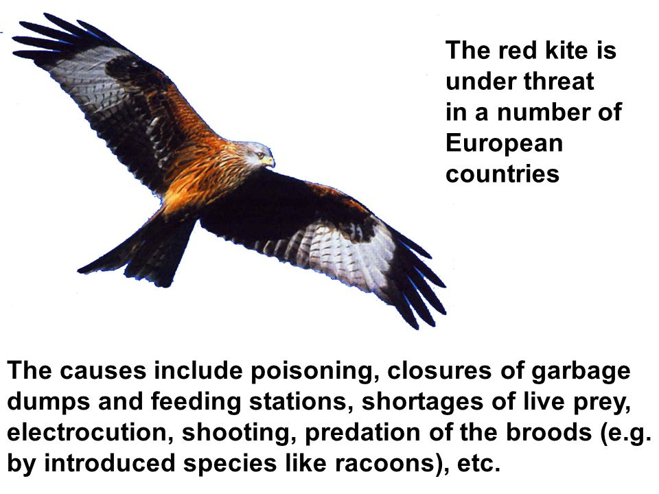 The causes include poisoning, closures of garbage dumps and feeding stations, shortages of live prey, electrocution, shooting, predation of the broods (e.g.