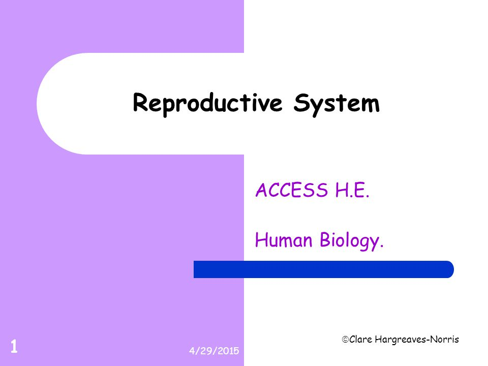 4/29/2015  Clare Hargreaves-Norris 12 Male Reproductive.wmv