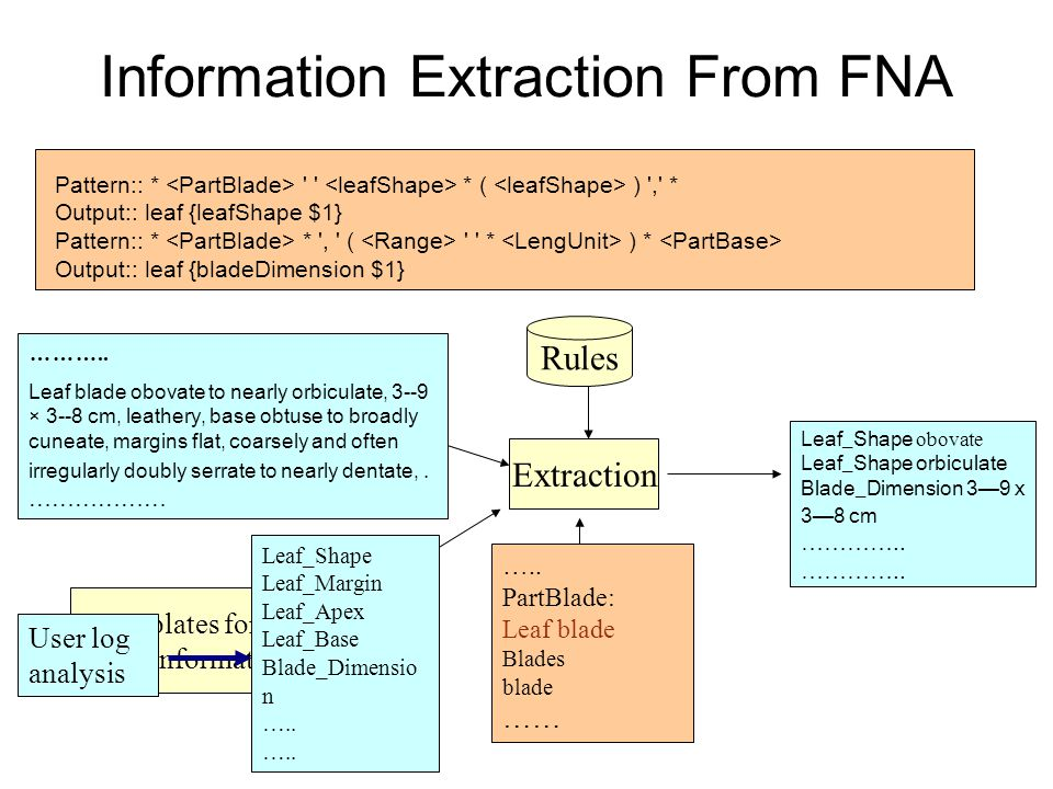 Templates for useful information Information Extraction From FNA Extraction Rules Structured information User log analysis Leaf_Shape Leaf_Margin Leaf_Apex Leaf_Base Blade_Dimensio n …..