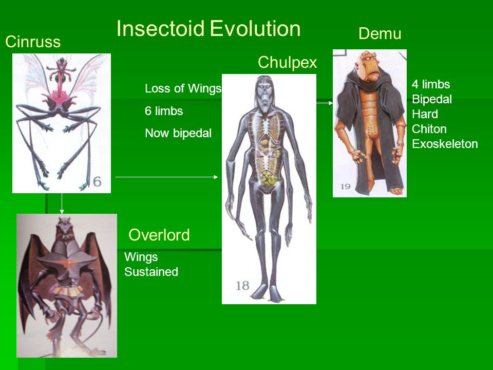 Cinruss Loss of Wings 6 limbs Now bipedal Chulpex Insectoid Evolution Demu 4 limbs Bipedal Hard Chiton Exoskeleton Wings Sustained Overlord