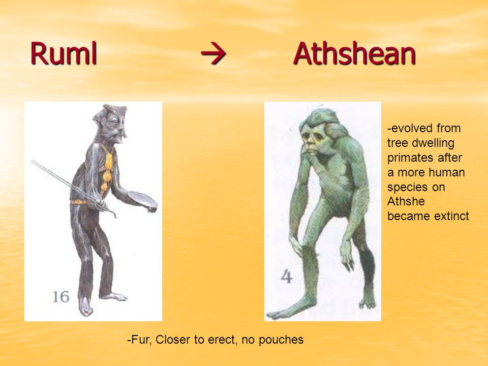 Ruml  Athshean -Fur, Closer to erect, no pouches -evolved from tree dwelling primates after a more human species on Athshe became extinct