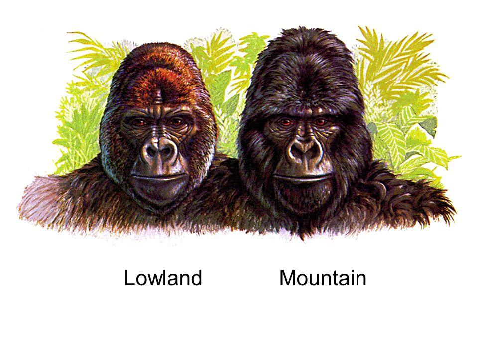 Lowland Mountain