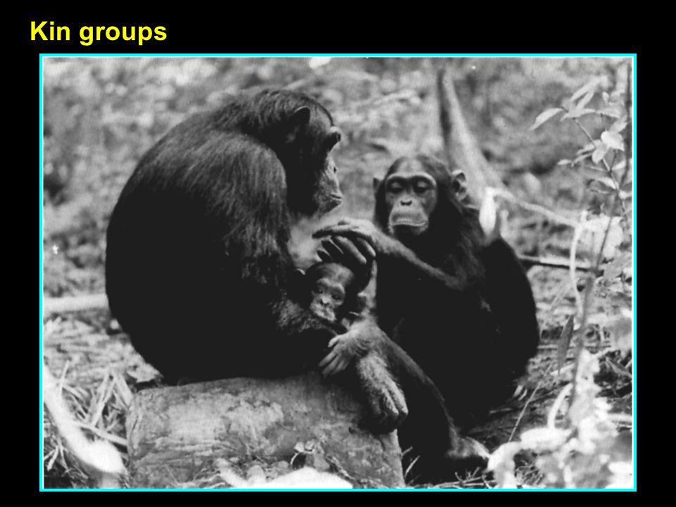 Kin groups