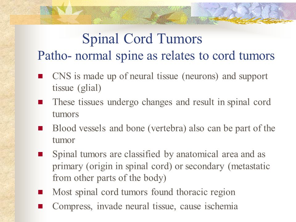 Spinal Cord Tumors Patho- normal spine as relates to cord tumors CNS is made up of neural tissue (neurons) and support tissue (glial) These tissues un